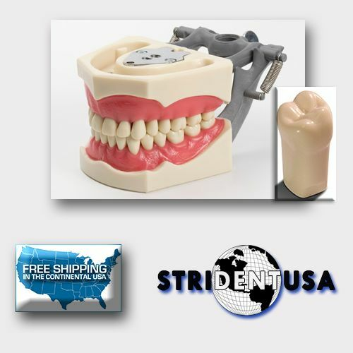 DENTAL TYPODONT 860 PLUS BONUS 5 TEETH (Molars) FITS COLUMBIA BRAND TEETH