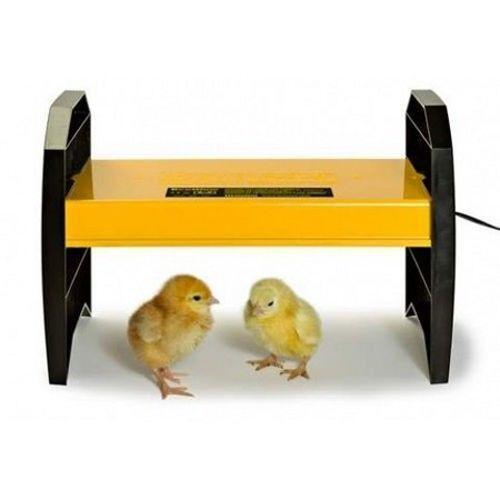 chicken brooder ebay. Black Bedroom Furniture Sets. Home Design Ideas