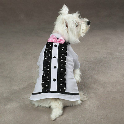 Dog Best Man Shirt Clothes Wedding Party Special