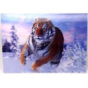 Wandbild Tiger