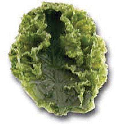 Salad Bar Kale Replica - 6 Single Leaf