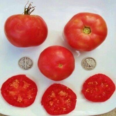 Burpee's Globe - Organic Heirloom Tomato Seeds - Perfect Slicer - 40 -