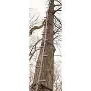 Climbing Sticks