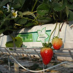 6X Powerful Planting Multipurpose Jiffy Growbag - Dual Layered Veg/Fruit/Flowers