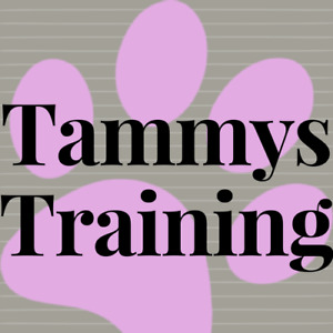 Private Dog Training Classes