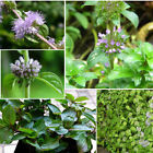 10 (30 to 40 °F) Plants, Seeds & Bulbs