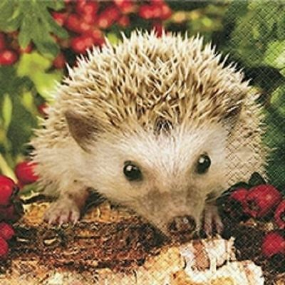 4 x Paper Napkins - Hedgehog - Ideal For Decoupage / Napkin Art(2090)