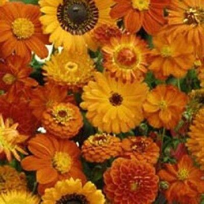 Wildflowers Seeds Orange Mix Wild Flower 500 Seeds  ()