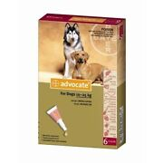 Flea, Tick Remedies