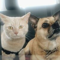 URGENT: Dog and cat sitter needed! - Pet Sitter Wanted