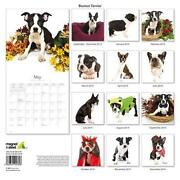 Boston Terrier Calendar