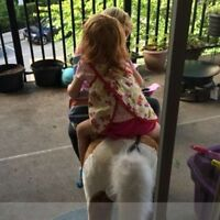 Part-Time/Occasional/Before/After School Nanny Wanted