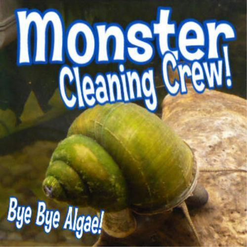 Trapdoor snails fish aquariums ebay for Algae eating fish for ponds