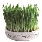 Unbranded Cat Cat Grass Seeds Catnip