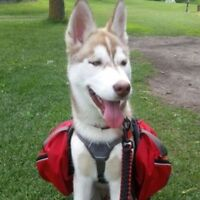 Need a dog-sitter in jasper for a weekend - Pet Sitter Wanted