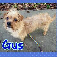 "Young Male Dog - Terrier: ""Gus"""