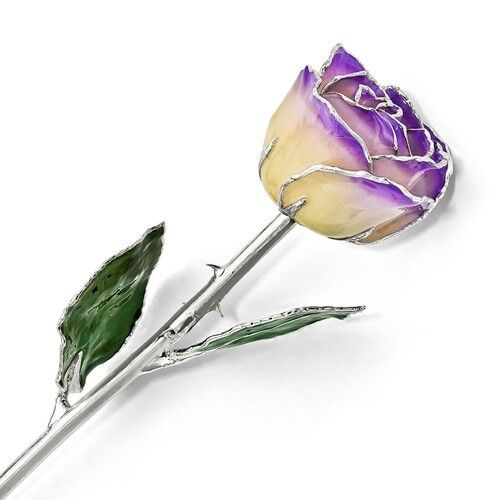"""LILAC & CREAM ROSE Silver Trimmed Lacquered Rose Long Stem Rose 12"""" Gift Box"""