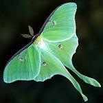 Mothspauls Big Deals