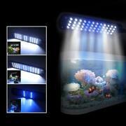Fishing Black Light