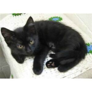 2 adorable black kittens need rehoming