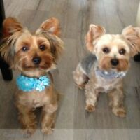 Reliable & Caring Pet Sitter Needed
