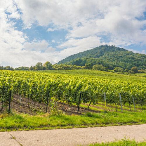 4Tg Wandern Pfälzerwald Deutsche Weinstrasse Hotel bei Bad Dürkheim Pfalz Urlaub