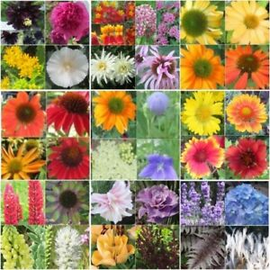 SEEDS for Sale NOW -OPENING for Plants May 1 '18. Thank you...