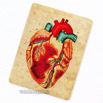 Heart #2 Deco Magnet, Decorative Fridge Antique Medical Illustration Anatomy Heart Fridge Magnet