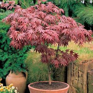 Incroyable Tree Plant Pots