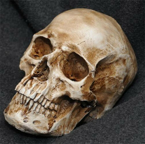 New-Retro-Human-Skull-Replica-Resin-Model-Medical-Realistic-lifesize-1-1