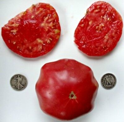 Brandywine Pink - Organic Heirloom Tomato Seeds - Best Beefsteak - 40 Seeds