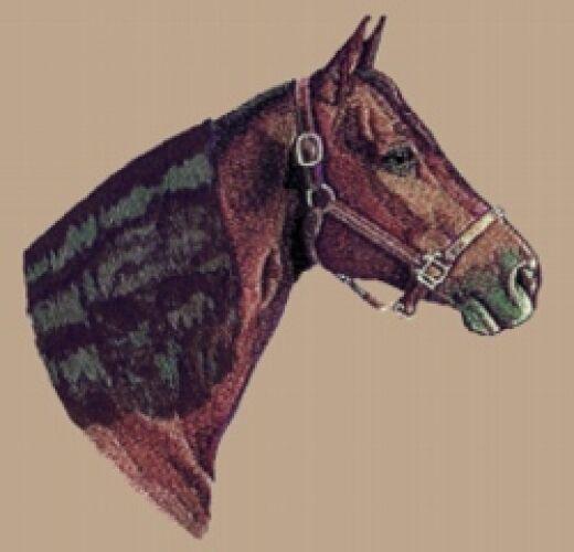 Embroidered Fleece Jacket - Morgan Horse BT2473 Sizes S - XXL