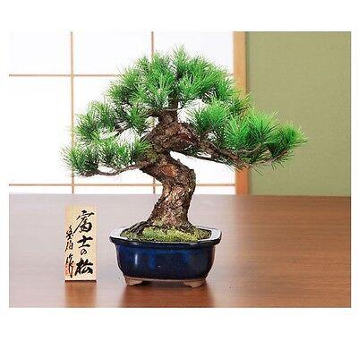 "Bonsai Pine ""FUJI no Matsu"" Replica Handmade in Japan Realistic Artificial Tree"