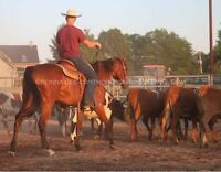 Western Horse Riding Lessons