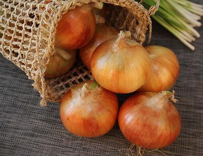 100PCS Yellow Onion Seeds Organic Vegetable Food Plant House Home Garden