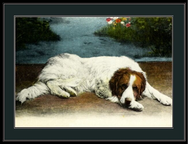 English Print Great Pyrenees Dog Art Picture