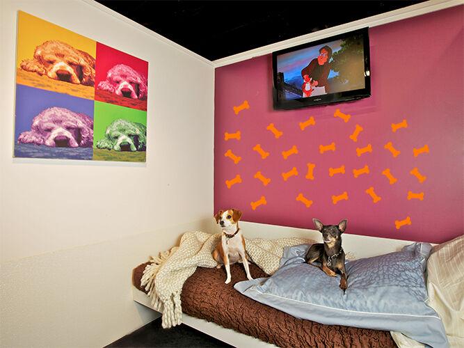 "3"" X 1.5"" Dog Bone Home Office Wall Bathroom Window Vinyl De"