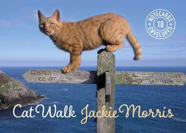 Cat Walk Notecards by Jackie Morris   Card Book Book   9781909823402   NEW