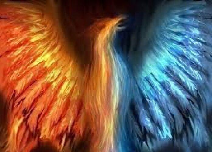 Phoenix9509