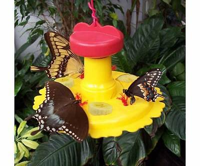 Butterfly Nectar & Fruit Feeder for Garden ...
