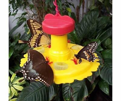 Butterfly Nectar & Fruit Feeder for Garden ...