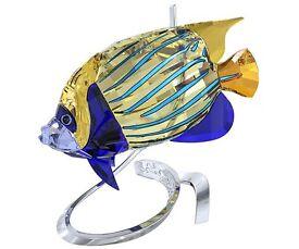 Swarovski angelfish
