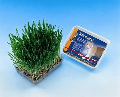 Nobby Katzengras Saatgut & Schale zum selbst ziehen 100g (EUR 2,99 / 100g)