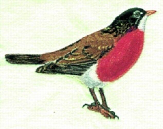 Embroidered Short-Sleeved T-Shirt - Robin BT2822