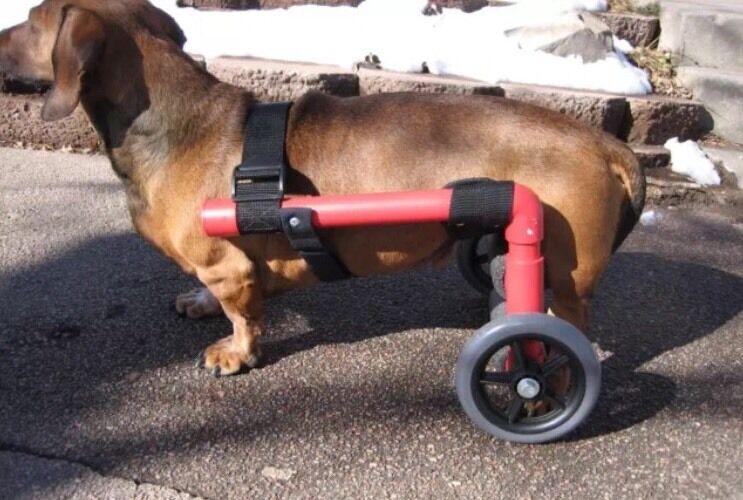 Custom Dog Wheelchair/Dogs Under 30lbs
