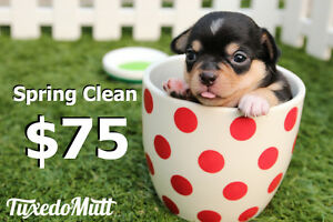 Dog Waste Clean Up