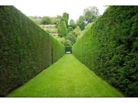 Hedge cutting/ weed spraying service