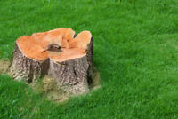 STUMP REMOVAL AND TREE REMOVAL