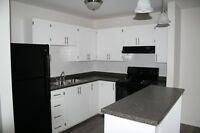 Live Downtown in a Great Location - Renovated Two Bedroom Apt.