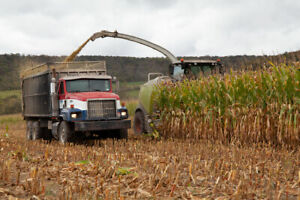 CORN SILAGE WANTED
